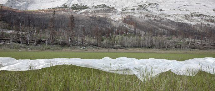 Plastic landscapes Canada